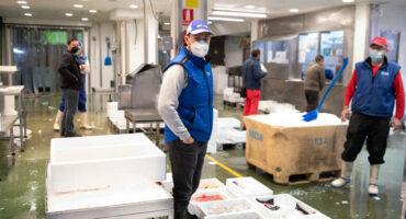 Japofish Mercavalencia